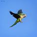 Hawk Style