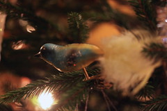 Bird singing (Hannhell) Tags: christmas bird decoration christmastree gift christmas2015