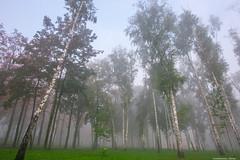 Misty morning-5.jpg (Elen_L) Tags: 2016 kharkov park september ukraine autumn beauty city fog landscape morning nature naturewakesup