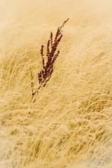 Embalse de Santillana (jchmfoto.com) Tags: wondersofnature nature entorno environment medioambiente maravillasdelanaturaleza naturaleza sotodelreal comunidaddemadrid espaa es