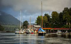 Boats in Tofino Harbour (SonjaPetersonPh♡tography) Tags: tofino clayoquotsound ocean longbeach tourists water westcoastvancouverisland vancouverisland nature surfing fisherman whalewatching britishcolumbia canada nikond5200 nikon 2016 westcoast boats boating harbour pacificrimnationalparkreserve bcparks