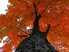 Automne - Fall (Jacques Trempe 2,480K hits - Merci-Thanks) Tags: stefoy quebec canada parc park jacques cartier automne fall couleur color fleuve river stlaurent stlawrence