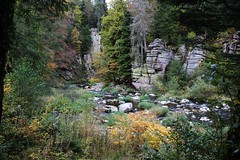 The German wilderness (Hugo von Schreck) Tags: hugovonschreck outdoor blackforest germany europe murg canoneos5dsr