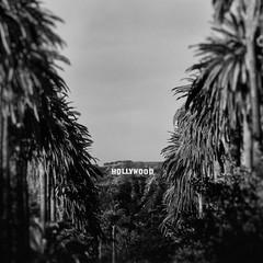 that sign. hollywood, ca. 2016. (eyetwist) Tags: eyetwistkevinballuff eyetwist hollywood hollywoodsign palmtrees vanishingpoint bokeh shallow focus depthoffield blackwhite bw black white monochrome vignette angeleno socal california losangeles la los angeles nikon digital d7000 sigma 70300mm sigma70300mmf456apomacro alienskinexposure7 exposure niksilverefex2 nik silver efex nikanalogefex2 analog effect wetplate grain distressed texture processed filter photoshop postprocessed postprocessing square type typography typographic lettering sign signage billboard famous landmark iconic signgeeks windsorsquare palms