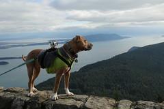 Zayda at the Lookout (DanaRane) Tags: 2016 2016october hiking orcasisland dogs zayda