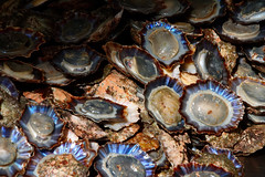 20161012_113217_DxO (SnapperNeil) Tags: funchal limpets