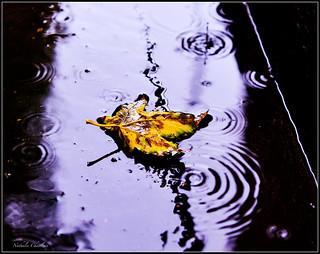 La noyade 🍂 Drowning