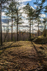 20161029-IMG_2303 (Herra J) Tags: lieto southwestfinland finland sunny partly cloudy trees forrest nature
