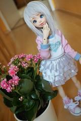 Flower girl (raciele) Tags: atelier momoni bjd balljointeddoll ball jointed doll dolly cute kawaii sweet fairy kei mori