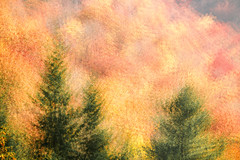 Seasonal Impressions (Brian Truono Photography) Tags: greatsmokymountainsnationalpark nps nationalpark nationalparkservice smokymountains abstract autumn colorful exposureblending fineart fineartphotography forest graphic green impressionism landscape leaves mountains multipleexposure natural nature orange painterly red stippling texture trees yellow gatlinburg tennessee unitedstates us