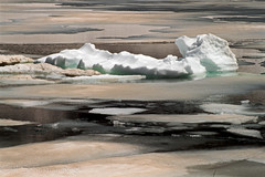 Pavian badet (Urschner Br) Tags: andermatt bergsee kturi oberalpsee pavian schnee schweiz see suisse suiza uri urserental baboon babouin babuino lac lago lake neige nieve snow switzerland