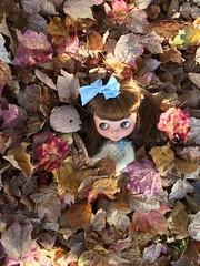 Scarlett's Autumn