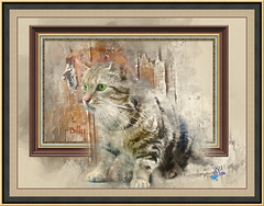 2016 - recherche (bDom [+ 36.000 photos for blog]) Tags: animaux chat flin mammifre nature cat bdom dessin aquarelle watercolor imageframer billy painting