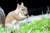 Breakfast Time (kevindaly24) Tags: nature natural wildlife animals wildanimals nikonprofessional nikon dslr nikon80200f28
