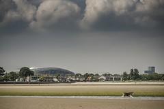 A shot of the Aviva from Sandymount Strand (a.lee.miller) Tags: ifttt 500px no person water landscape travel tree daylight sky outdoors storm beach city nature dog aviva dublin sandymount