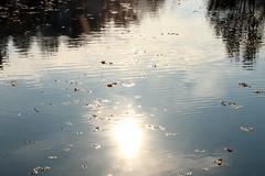 Herbstfluss (gripspix (OFF)) Tags: 20161109 river fluss neckar reflections spiegelungen herbstlaub autumnleaves