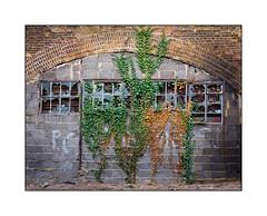 Empty Railway Arch Workshop, East London, England. (Joseph O'Malley64) Tags: railwayarch victorianstructure arch brickwork breezeblocks breezeblockinfill windows brokenwindows brokenglass woodenframes steelframes securitymesh barredwindows pointing mortar cement ivy decay urbandecay firedamage smokedamage