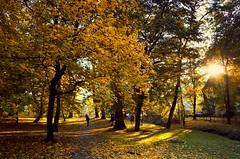Park of Decjusz (joanna_l95) Tags: park cracow decjusz krakow decjusza autumn fall