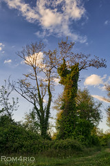 Cohabitation (Rom4rio Photography) Tags: nikon nikkor nikond3100 natura nature nuvole nori color cielo clouds sky cer allaperto outdoor albero tree copac înaerliber amateur amatore