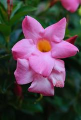 20160924_Cinq_Sens_Yvoire (2 sur 13) (calace74) Tags: fleurs macro jardinsdes5sens yvoire rhonealpes foretderipaille hautesavoie nature panorama thononlesbains
