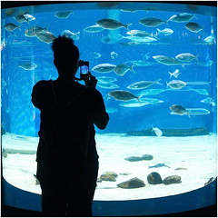 a photographers` view... (kurtwolf303) Tags: barcelona spain spanien katalonien aquarium fische fish watertank person gegenlichtaufnahme backlight water wasser smartphone olympusem1 omd microfourthirds micro43 portvell unlimitedphotos systemcamera mirrorless spiegellos catalonia 250v10f topf25 espaa europe laqurium olympusblue blue blau topf50 500v20f 800views 900views 1000v40f 1500v60f flickrelite topf100