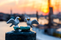 The seagulls and the fish (Ballou34) Tags: 2016 650d afol ballou34 canon eos eos650d flickr lego legographer legography minifigures photography rebelt4i stuckinplastic t4i toy toyphotography toys rebel stuck plastic safari sipgoeshamburg2016 hamburg germany sun sunrise boat water sea port building seagull bird fish