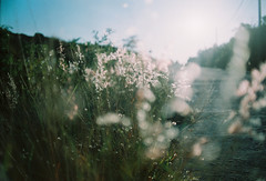(MrQ1984) Tags: 35mm film analogue fujicolor100 dof sunrise summer sunny om1 olympusom light