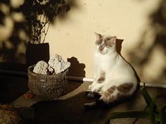 (skrytnynriv) Tags: gata cat sunbathing warm sunrise