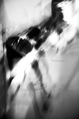 Baci Rubati (314 Photographer) Tags: astratto bianconero animali cani baci