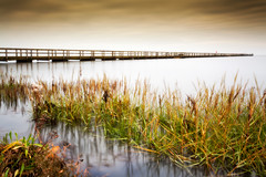 seagrass and high tides (Blende57) Tags: horizon longexposure wideangle seagrass pier clouds low angle peace tranquility serenity quietude northsea wesermarsch marsh marshland