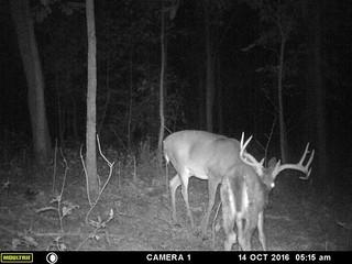 Kentucky Whitetail Hunt 30