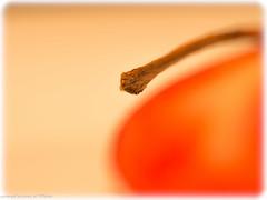red apple (somareja*pictures) Tags: macroaufnahme macrodreams macro olympusem10 olympusdigital redapple roterapfel fruit frucht natur flickr markusreber somarejapictures