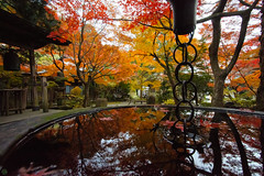20161203-DS7_5653.jpg (d3_plus) Tags: a05 building d700 street  architecturalstructure dailyphoto kanagawapref thesedays  ancientcity history    temple  streetphoto nikon shintoshrine   architectural nikond700 touring scenery    wideangle  shrine    superwideangle holyplace sanctuary autumnfoliage japan  autumn historicmonuments tamronspaf1735mmf284dild daily  fall tamronspaf1735mmf284dildasphericalif tamronspaf1735mmf284dildaspherical  nature tamron1735 tamronspaf1735mmf284    sky park    buddhisttemple   autumnleaves
