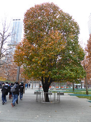 The Survivors Tree 9-11 Memorial Pools (footprints of original two towers) New York November 2016 (358) (Richie Wisbey) Tags: 911 september 2001 two twin towers world trade center centre ground zero memorial tribute survivor tree downtown new york city usa nine eleven richard richie wisbey november 2016