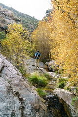 1611 Fall Color in Edgar Canyon (c.miles) Tags: coronadonationalforest edgarcanyon fallcolor geoffrey santacatalinamountains