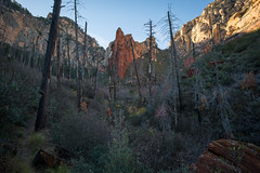 Sterling Pass (Fret Spider) Tags: nature outdoors hike path trail sedona redrock arizona fall season forestfire trees life recovery sonya7rii loxia2821 beauty serenity peace landscape wildlife commune valley sterlingpass trail46 ultrawideangle wideangle manuallens mirrorless mountains cliff
