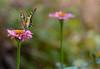 butterfly&flowers (Clarisse McClellаn) Tags: flower color green nature butterfly fly nikon bokeh d3100 flickrstruereflection1