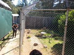 20150919_113537 (mjfmjfmjf) Tags: oregon zoo 2015 greatcatsworldpark