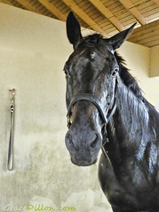 Shower Time (Grace Pedulla Dillon) Tags: ranch horse pet wet animal shower farm grooming bathing equine domesticanimal