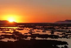 P1060198 Magical sunrise to Titicaca, from Puno.  --  PS  (peteshep) Tags: peru laketiticaca sunrise reeds ps freshwater puno 2015 peteshep copyrightphoto fz200