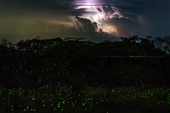 Lightning and fireflies (Valter Patrial) Tags: storm nature night raios lights natureza luzes lightning noturnas fireflies tempestade flashes relâmpagos vagalumes