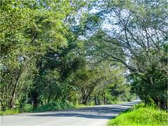 Tamazunchale - SLP México 150221 100057 02550 HX50V (Lucy Nieto) Tags: méxico árboles mx sanluispotosí tamazunchale huastecapotosina