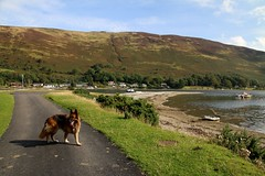 Ben - Day 2 2015 - 27.9.15 On Arran (183) (marie137) Tags: trees sunset sky food sun castle beach animals garden boats fire hotel scotland countryside town waterfall ruins stag parks tourist deer whisky campsite midge marie137