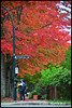 Stressed Colour - Cambridge N17498e (Harris Hui (in search of light)) Tags: street autumn red canada colour green vancouver photography nikon photographer bc candid streetphotography richmond shooting shooter stressed climatechange climate globalwarming cambridgestreet eastvancouver socialresponsibility d300 candidportrait streetcandid autumncolour fallfall nikon18200mmvr nikonuser nikond300 harrishui vancouverdslrshooter responsibilitiy morethanshooting stressedcolour