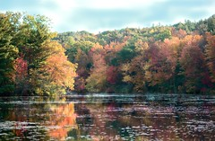 More stupid dead leaves... (this needed some fixin, sorry, so again...) (Chancy Rendezvous) Tags: fall morning new england foliage leaves color autumn massachusetts newengland pond water deadleaves blurgasmcom blurgasm davelawler davidclawler nikon nikkor chancyrendezvous