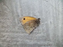 End (Nicolaspeakssometimes) Tags: nature butterfly finding