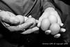 2015_10_12_Krust_0141.jpg (Christian.Patrick) Tags: alsace production poule ferme lieux oeuf hautrhin krust eteimbes fermedeloréedubois