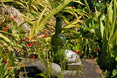 - (Magdelaine L Photography) Tags: flowers plants nature bottle weeds outdoor