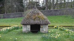 DSCF7253 (rugby#9) Tags: trees house water grass wall garden estate daffodil blair thatch daffodils duckhouse walledgarden blaircastle thatchroof blairatholl dukeofatholl athollestates