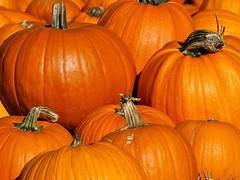 Pile o' Punkins (e r j k . a m e r j k a) Tags: autumn pennsylvania pumpkins harvest explore allegheny sewickley i79pa pa65 erjkprunczyk